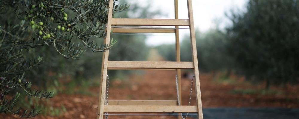 19 Ladder